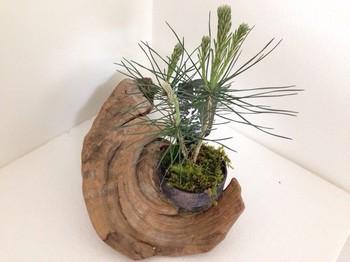 ナチュラルな雰囲気のおうちなら、流木と組み合わせて、大自然を表現してもカッコいい!
