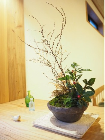 1本の樹で作ったミニ盆栽も素敵だけど、いくつかの植物を組み合わせて作ったミニ盆栽もスタイリッシュですね。