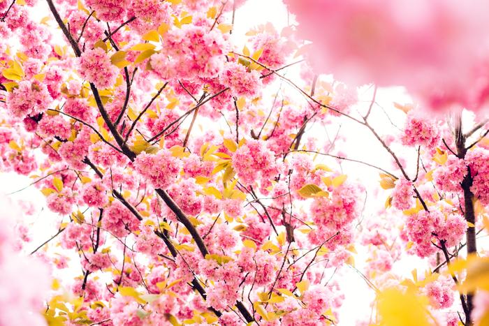 新しい生活が始まる人もそうでない人も。春は、なぜだかクローゼットの中にも新しい風を呼び込みたくなるものです。新しい服、新しい靴、そしてストレスのない心地よいアンダーウエアで身も心も心機一転。新しい季節を迎えてあげませんか?
