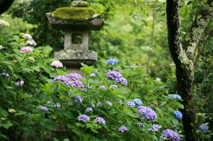 牡丹の名所として有名な長谷寺の境内では、初春は桜、春はツツジ、初夏は牡丹、梅雨はアジサイ……と、四季折々で美しい花を観賞することができます。
