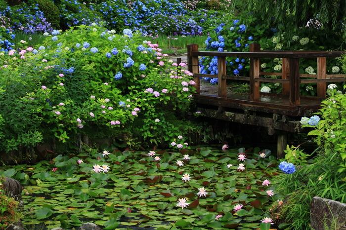 花の郷滝谷花しょうぶ園では、年間を通して美しい花を観賞することができます。古き良き日本の原風景を残す里山に囲まれた花の郷滝谷花しょうぶ園は、約25000平方メートルの敷地があります。広大な敷地には6月になるとアジサイと花ショウブが競うように咲き誇り、絵本の挿絵のような景色へと変貌します。