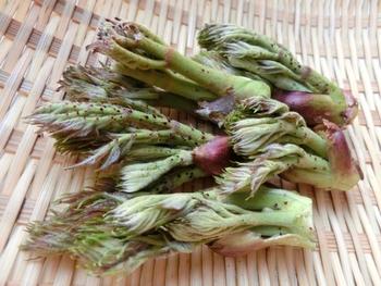 『たらの芽』も、ほろ苦い大人の味わいの山菜です。天ぷらやおひたしの他、パスタなどにもおすすめです。 たらの芽は芽が伸び過ぎでも、小さすぎてもNG。芽のつぼみが少し開いて芽の部分が3~5cm位伸びているものが食べやすいようです。