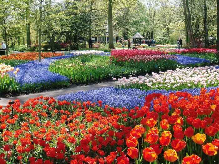 """春にオランダを訪れたら、チューリップは必ず見ておきたいですよね♪美しい花々に囲まれながらゆっくりお散歩できるのが、こちらの「キューケンホフ公園」。""""ヨーロッパの庭""""とも呼ばれており、巨大な庭園内には、チューリップをはじめヒヤシンスやスイセンなど、700万本以上の花々が咲き誇ります。"""