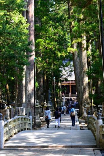 最奥部の御廟橋を渡った先に、今も空海が瞑想を続けているという弘法大師御廟があります。高野山では毎朝僧侶たちがこの橋を渡り、お大師様に朝食を運びます。聖域中の聖域なのでこの先は撮影禁止になっていますので、ぜひ自分の足で訪れてみてくださいね!