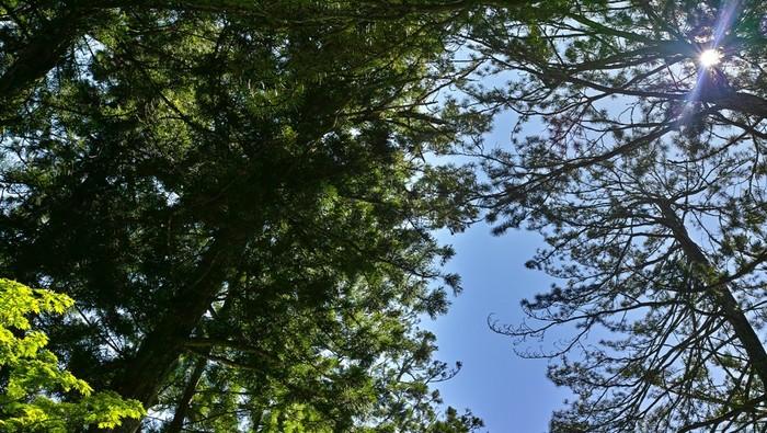 奥の院周辺を散策した後は、山小屋でゆっくりとした時間を過ごしたり、森の中での瞑想やハンモックにゆられたりと、リラックスできること間違いなしの森林セラピーはいかがでしょう!今度の休日は、歴史と自然が融合する高野山へ、心身をリセットしに出かけてみませんか♪