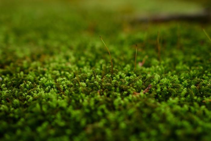 苔も用意すると、とっても雰囲気が出ます!ハイゴケやスギゴケなどは、園芸店でパック売りされていることも。手に入らない時は、水を含ませて使える「水ゴケ」もおすすめ。