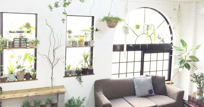 SNSで人気の素敵なインテリアのおうちや、おしゃれなカフェには、グリーンが飾られていることが多いですよね。ベーシックなお部屋も、グリーンがあることでぱっと明るく、ナチュラルにしてくれます。