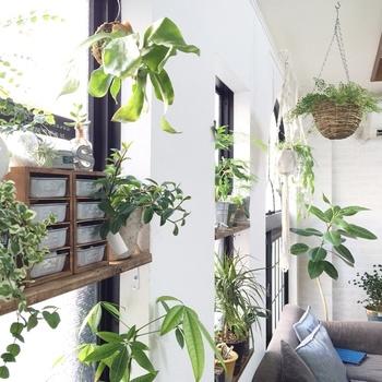 グリーンたっぷりのお部屋、憧れますよね。フェイクなのでいっぱいあっても、お世話がたいへんになるわけではありません。置き場所に合わせて好きなように葉っぱや枝をカットすることだってできます。