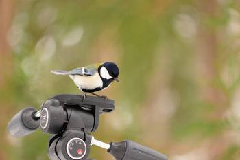 いつもの生活圏で見られる、日本の野鳥たちは雑貨のモチーフとしても人気! たまに見かけるあの鳥の名前やグッズを探してみませんか?