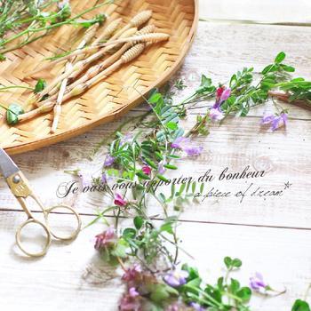 女の子の憧れ、花冠もおすすめ。シロツメクサやレンゲで編む花冠がメジャーですが、タンポポやシロツメクサを編み込んだり、カラスノエンドウなどつる性の植物を使ったりしても◎。  小さいお子さんと作ると、とても喜んでくれますよ。
