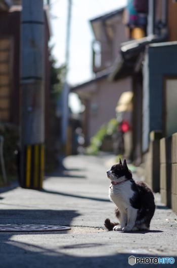 早めに家を出て、すがすがしい朝の日ざしを味わいながらひと駅ぶん歩いてみるのも楽しいもの。いつもなら早足で通りすぎてしまう場所で、ステキな路地裏のお店を発見できるかもしれません。