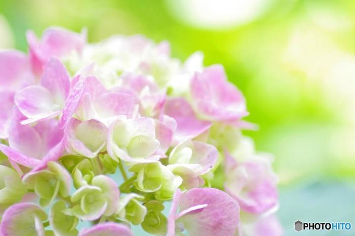 梅雨の時期になると、約3500株ものアジサイが競うように花を咲かせます。毎年梅雨の季節に行われるあじさい祭りでは、大勢の人々がこの地を訪れみなぎる活気で賑わいます。