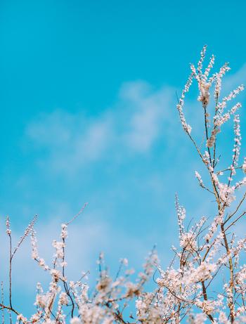 自然の豊かな場所にお出かけしたり、よい空気を身体いっぱいに吸い込んだり、晴れた日の明るく青く澄んだ空を見上げてみてください。それだけで、日頃の疲れやネガティブな感情が自然の中に溶けて、穏やかな気持ちにしてくれるのです。
