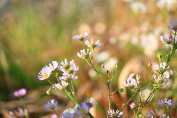お散歩途中に小さな花が咲いているのを見かけると、春の訪れに心が軽やかになります。野の花は小さく目立たないものが多いですが、近づいて見てみると、素朴な可愛らしさを発見できて嬉しくなります。  ぜひ春の可愛らしい花々をお土産に持ち帰って、居心地の良い部屋作りに生かしてみませんか?