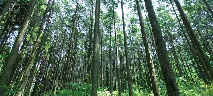 森林資源を今まで無価値とされていた「未利用材」から生まれた『森水いぶき』。このようなアロマ商品だけでなく、他にも久恒森林では、木工商品や燃料など、さまざまな価値を生み出す「森林資源のカスケード利用」から、日本の森の新たなる可能性を創造し続けています。