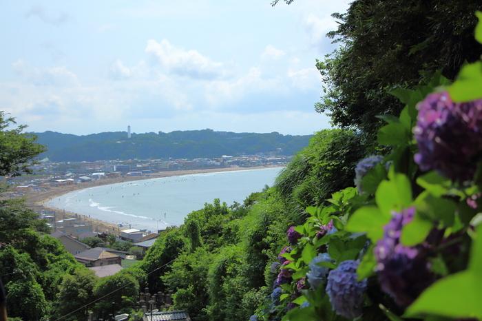 高台に建つ成就院からの眺望は抜群です。山門の前からは、群生しているアジサイを背景に、由比ヶ浜と材木座海岸を臨むことができます。