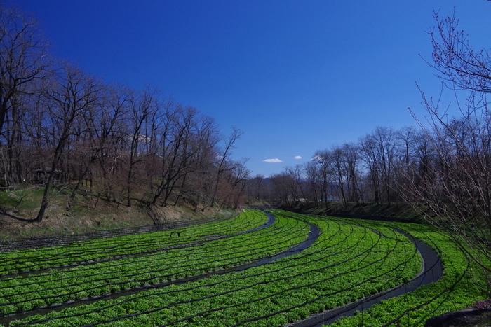 安曇野の湧水を利用してわさびを栽培する、日本最大規模のわさび農場。黒澤明作品『夢』のロケが行われたことでも知られます。広大な丘陵に広場や茶屋、彫刻などが配置され、お散歩にも◎
