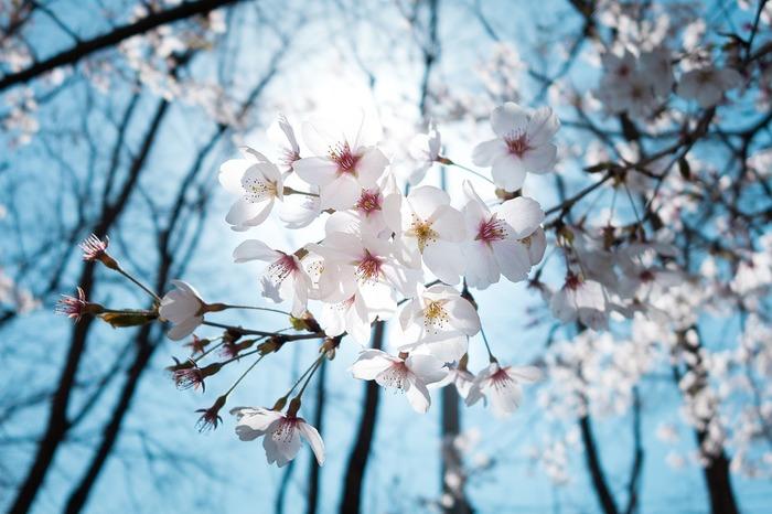どんな人にも訪れる春。春めいていく陽気にワクワクしている方も多いのではないでしょうか。学校や職場が変わる人もそうでない人も、これまでの何かを一度リセットして、新しい素敵な暮らしをはじめるのにピッタリの季節!