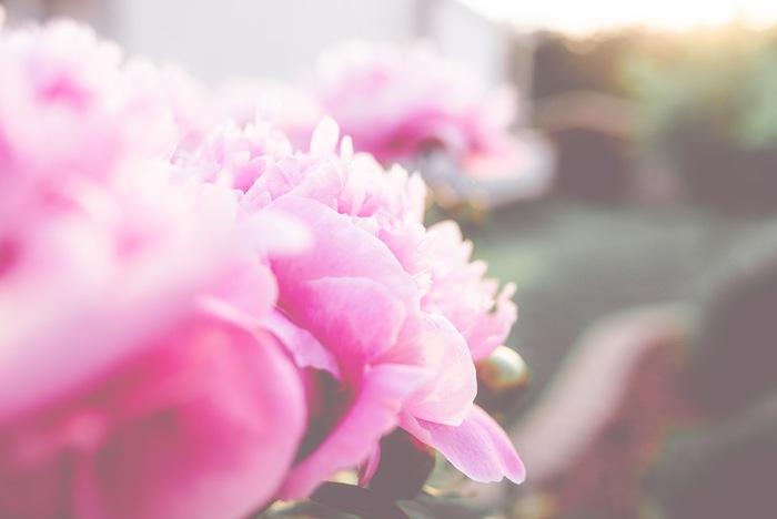 ◇ピンク◇ 幸せな気持ちを呼び込んでくれるのが、ピンク色。幸福感が高まり、自分だけでなく相手にも優しい気持ちで接することができるようになります。