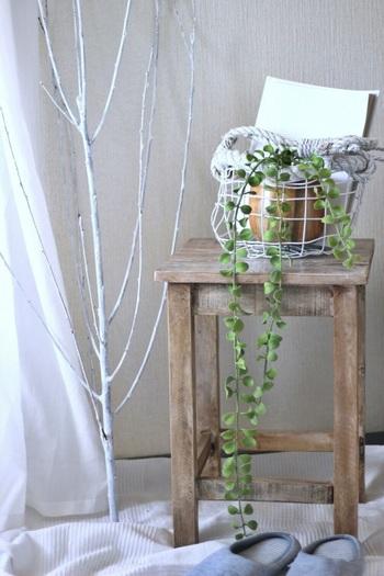 インテリア映えするものといえば、長く垂れるタイプのグリーンですね。こちらは「垂れる丸い葉っぱ」。植木鉢や紙袋などで根本を隠してディスプレイすれば本物そっくりです。