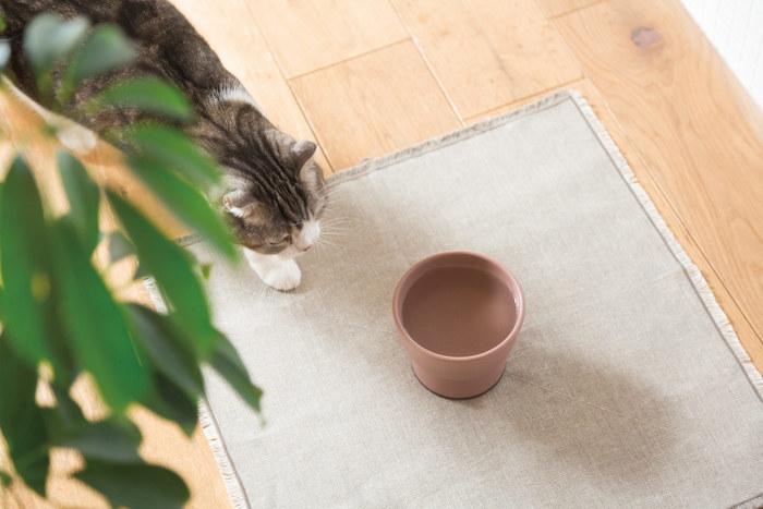 ペット用品を企画する「RINN」とのコラボで出来た猫用ウォーターボウル。陶磁器は猫用食器としても良いのだそうです。