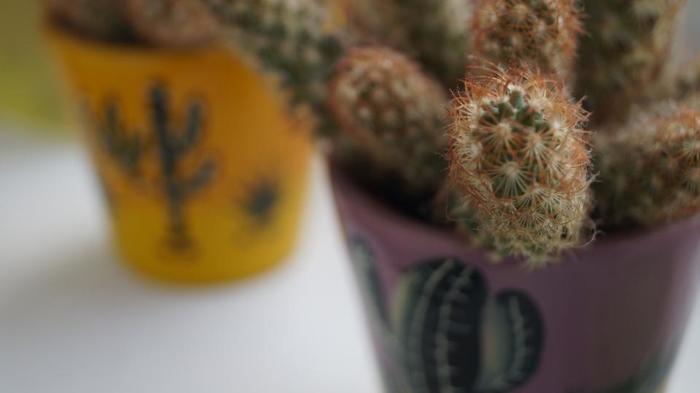 ミニサボテンは、手軽にメキシコ風に仕上がる便利アイテム。鉢をペイントすれば、より完璧です♪ そのほか、骸骨やマラカスなど、身近なものでメキシコっぽいアイテムがあるかも!?