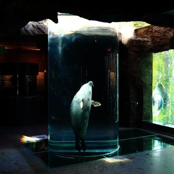 シロクマやアザラシ、ペンギンといった人気の動物がその生態を生かした行動展示というで方法で展示されています。さらにエゾモモンガやキタキツネといった、北海道にしか生息していない動物を展示している北海道産動物舎も人気です。