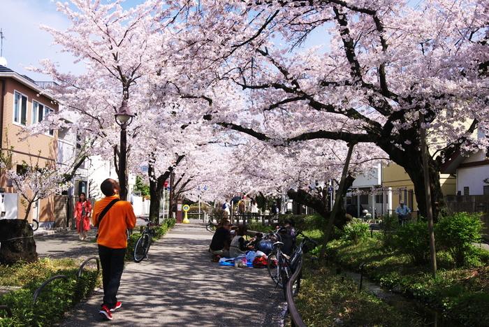 このあたりまで来ると、下北沢の喧騒は嘘のよう。閑静な住宅街が広がります。桜の時期の北沢川緑道は、桜の名所として地域の人に親しまれています。
