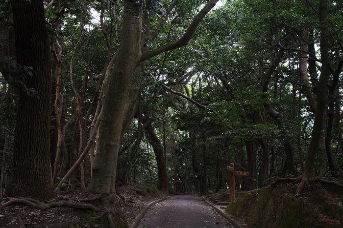 公園内には原生林や巨大なクスノキなど貴重な自然が残っており、瀬戸内海国立公園の一部にも指定されています。