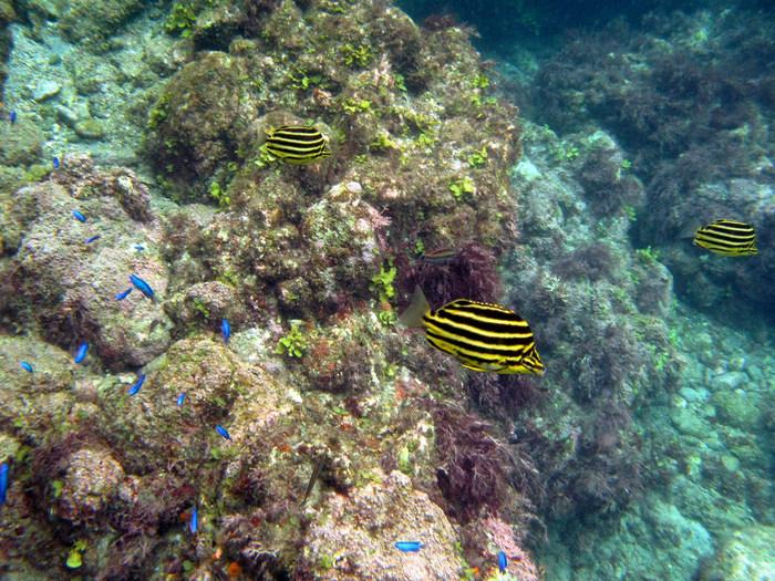 抜群の透明度を誇る「ヒリゾ浜」。伊豆地区で、最も美しい海だと称されています。黒潮の通り道になっていますので、南国のお魚たちも海岸にやってきます。もちろん、サンゴやイソギンチャクも☆