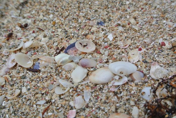 海岸には小さな貝殻が流れ着くことから、「日本小貝3名所」の1つに挙げられています。その昔、鎌倉の鶴ヶ丘から八幡大明神が上陸し、美しい小貝を寄せたのだと言い伝えられています。