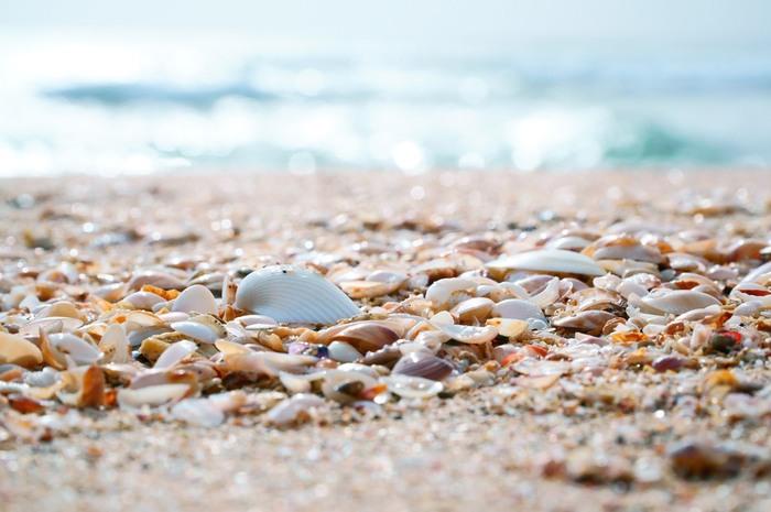 11月から3月にかけて打ち寄せられる貝殻。とてもキレイですね。