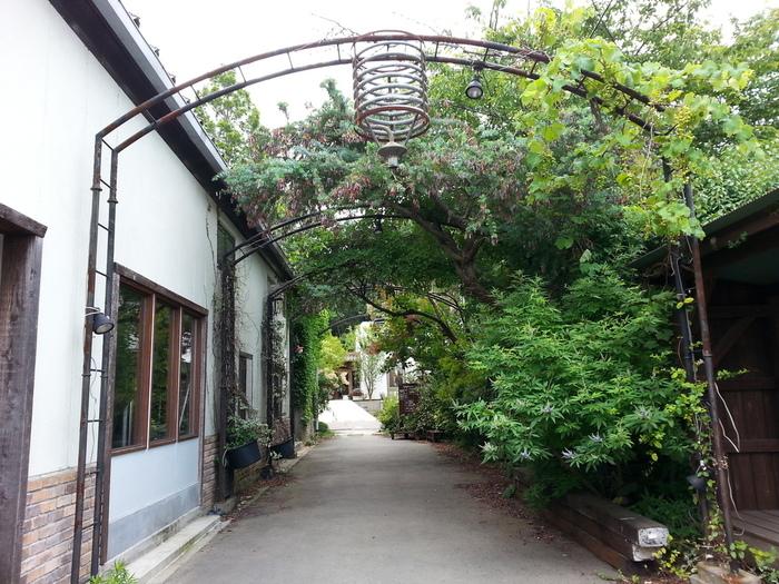 熊澤酒造はエントランスからして緑のアーケードがとても素敵。一歩足を踏み入れると、緑とレトロ感にあふれた別世界が待っています。