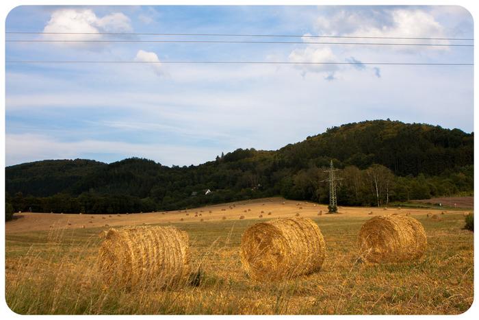 農作物の収穫時期になると、あちこちに牧草ロールが現れます。黄金色をしたなだらかな丘陵地帯には、牧草ロールが点在し、牧歌的でどこか懐かしい雰囲気が漂っています。
