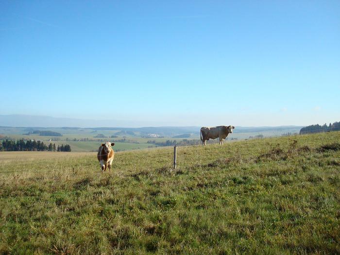 モラヴィアは土壌に恵まれ、なだらかな丘陵地帯には農地や牧草地が広がっています。