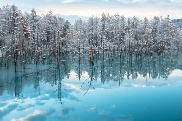 夜だけでなく、冬の朝の青い池の光景も素敵です。寒いけど早起きする価値は十分あるかも。ただし、冬は昼も夜も防寒対策や滑り止め対策などはしっかりとしてお出かけくださいね。