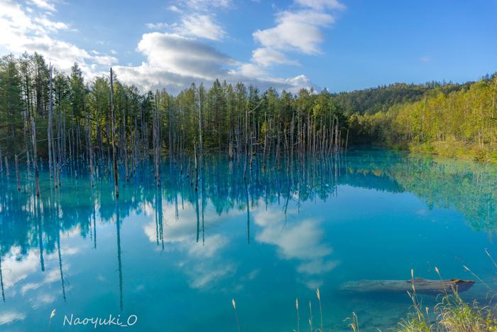 美瑛の町から車で約20分の距離にある白金温泉。十勝岳連峰を眺望できる緑豊かなビルケの森や、白ひげの滝など見所がいっぱいあります。中でも大人気の観光スポットがこちら、数年前にアップル社のMacBookの壁紙に採用されたことから一躍有名になった「青い池」です。