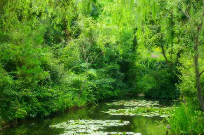 展示作品のクロード・モネの「睡蓮」を模した池。この池は美術館付近にあります。絵画の世界に引き込まれるような素敵な風景もぜひ鑑賞しましょう。