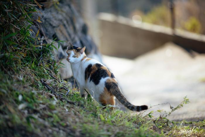 男木島は猫島としても知られた島です。島を巡り歩けば、アチラコチラで自由で気ままな猫ちゃんたちと出会えます。