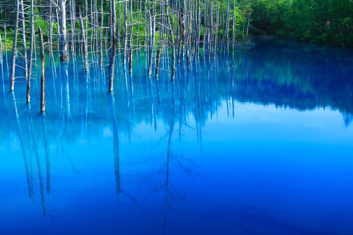 そのアルミニウムを含んだ水が美瑛川の水と混ざることで、コロイドという粒子が生成されます。それが太陽の光を散乱させ、中でも波長の短い青い光が散乱されやすいので、その光が目に届くと池の水が青く見えるそう。