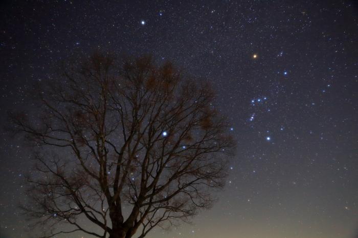 冬の星座オリオン座はとても見つけやすいと思います。上の画像だと右中央にありますね。ベルトにあたる「オリオンの三ツ星」から探しましょう。