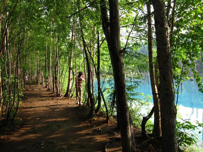また青い池は、入り口だけの観光ではなく周囲に巡らされている遊歩道を通って、その先に流れている美瑛川も見学することをお勧めします。