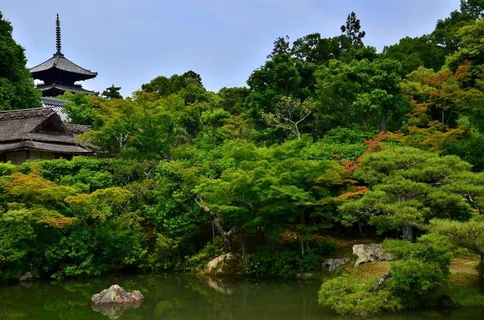 庭園が美しいことでも有名な仁和寺。眺めているだけでも心穏やかになれそうです。
