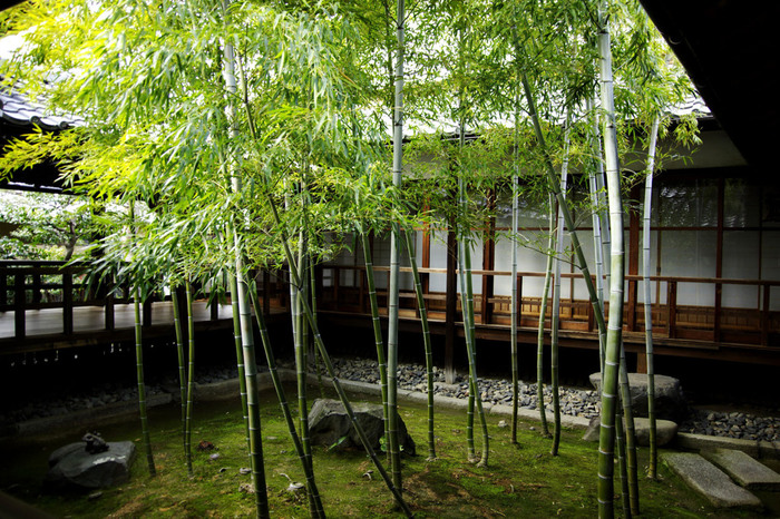 坪庭には竹が植えられており、とても美しい眺めが楽しめます。 竹のようにまっすぐとした心になれるよう、精進したいものです。