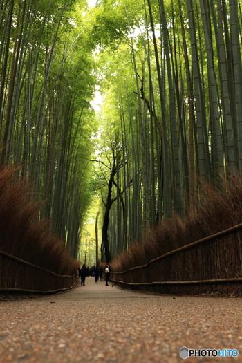 竹林で有名な嵐山。この圧倒的な空間に感動するのは、大人だけではないはず。 子どもも驚きと感動に包まれること間違いなしです。