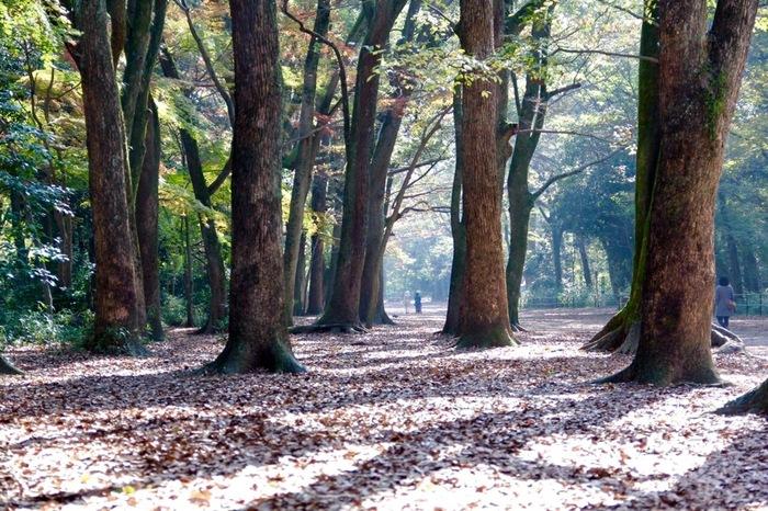 広い境内にある「糺ノ森」。ここには、子どもがどれだけでも走り回ることができる広さと自然があります。 神聖な空気感に、大人も心がシャンと整う気します。