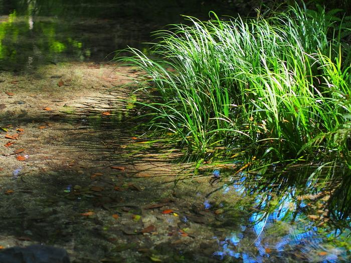 糺ノ森の中に流れる小川で、水遊びもできます。 大人も思わず触りたくなるほどの透明感。