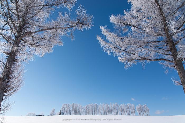 季節を問わず、いつ訪れてもその季節ならではの美しい光景に出会えます。