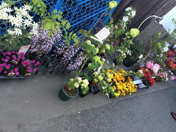 お花屋さんも出店していて、可愛らしい花々をリーズナブルに購入できますよ♪