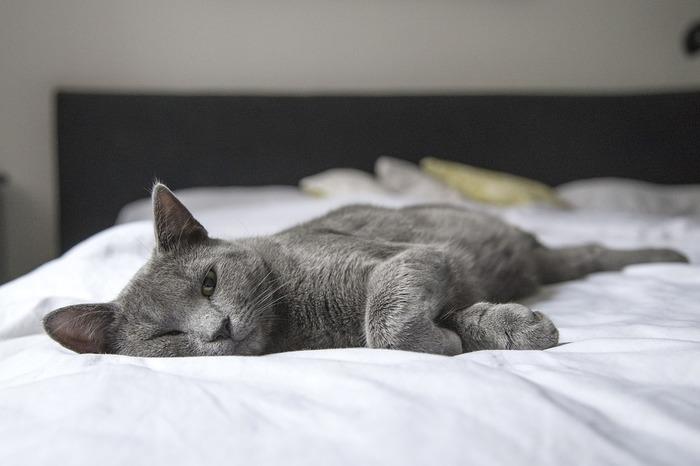 眠りにつく数分間、ホワイトのベッドシーツに体を包まれるだけで、素敵な夢が見られそう。疲れを癒し、生まれ変われるカラー。